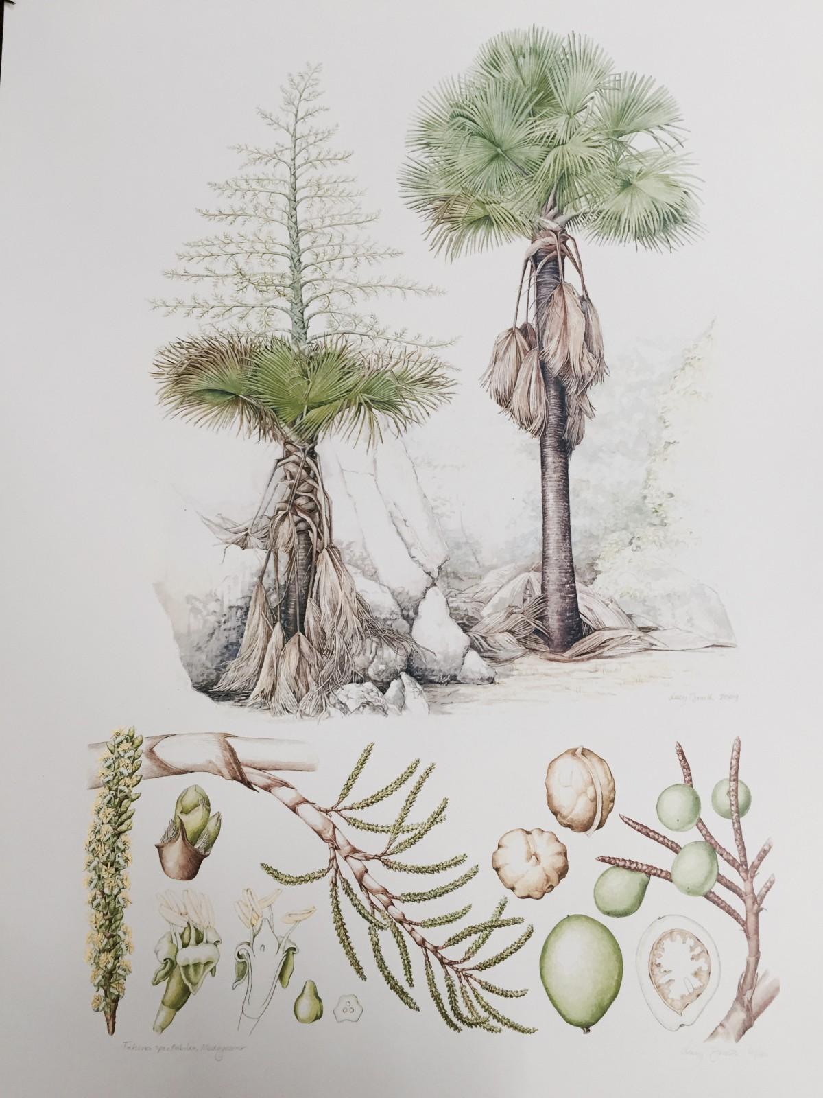 Kew Gardens - Herbarium - Botanic Art